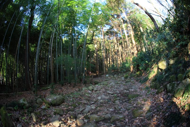 4.城山登山口-城山_竹林の登山道