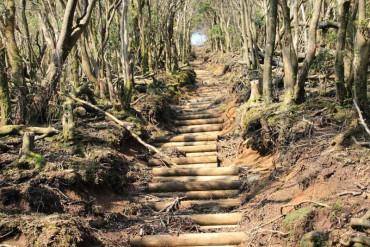 伊豆山稜線を歩く、仁科峠起点魂の山、猫越岳