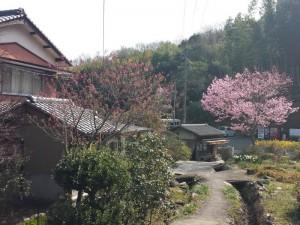 2016-03-24 09.47.48_藤井寺駐車場近く